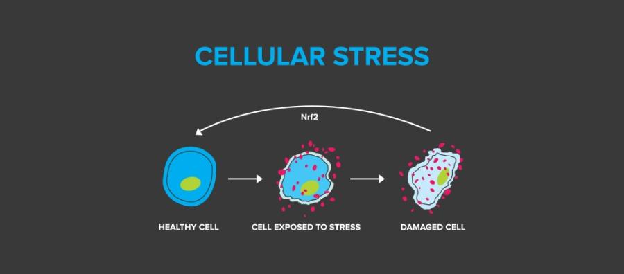 cellular-stress@2x